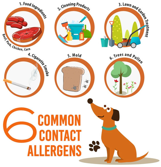 Common Allergens for Dogs and How to Solve the Problem Naturally