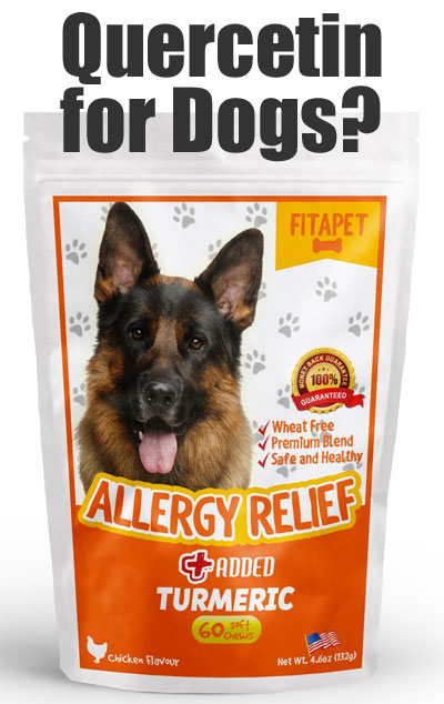 Natural Allergy Relief for Dogs with Quercetin, Turmeric, Bromelain